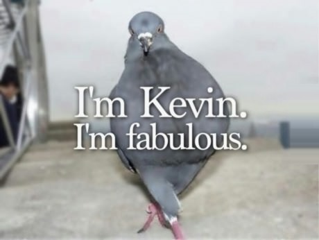 Kevin the Fabulous