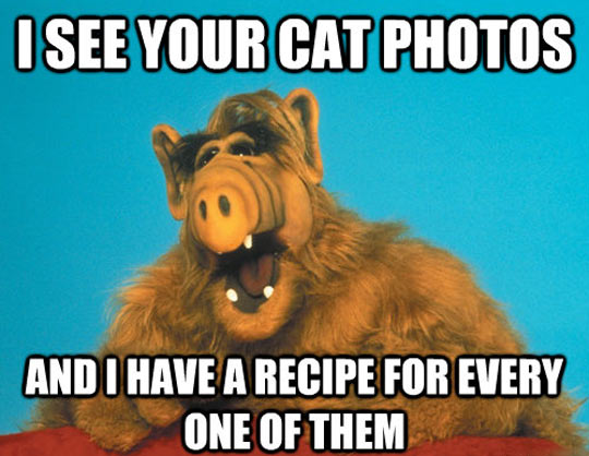 funny-picture-Alf-cat-photos-recipe-Internet