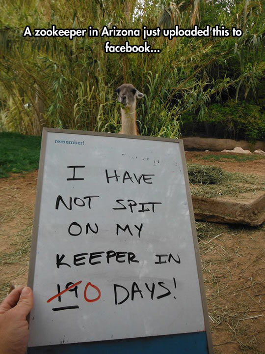funny-picture-Llama-zoo-keeper-sign-spit
