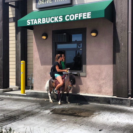 funny-picture-Starbucks-drive-thru-riding-donkey