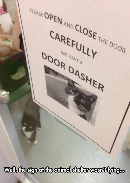funny-picture-animal-shelter-cat-sign