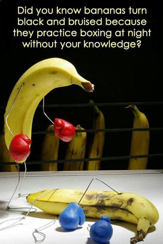 funny-picture-banana-fact-boxing-bruise