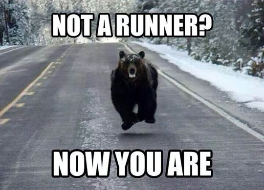 funny-picture-bear-jump-road-forest