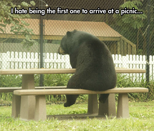 funny-picture-bear-picnic-bench-sitting