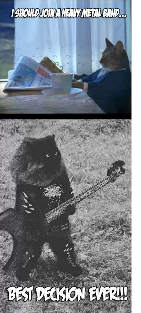 funny-picture-cat-band-matal