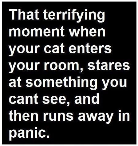 funny-picture-cat-creepy