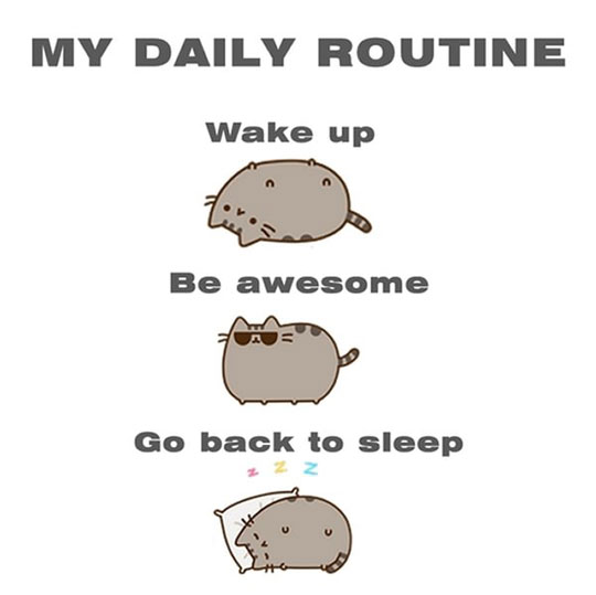 funny-picture-cat-daily-routine-sleep