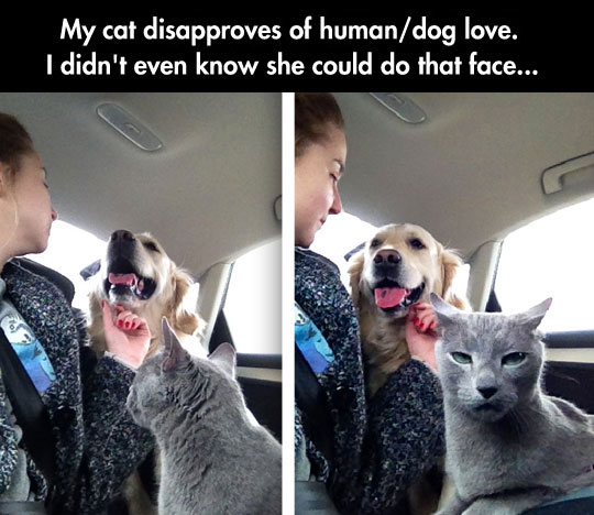 funny-picture-cat-dog-car-love-disapprove