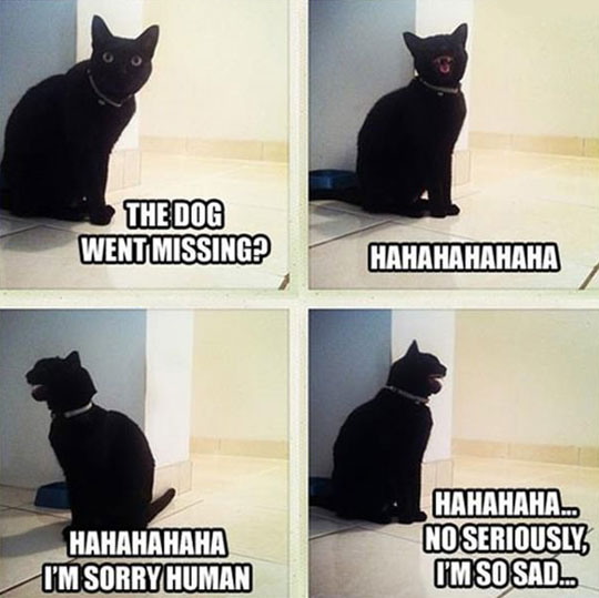 funny-picture-cat-laughing-lost-dog