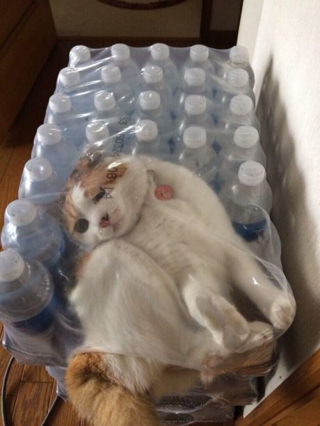 funny-picture-cat-stuck-fuck