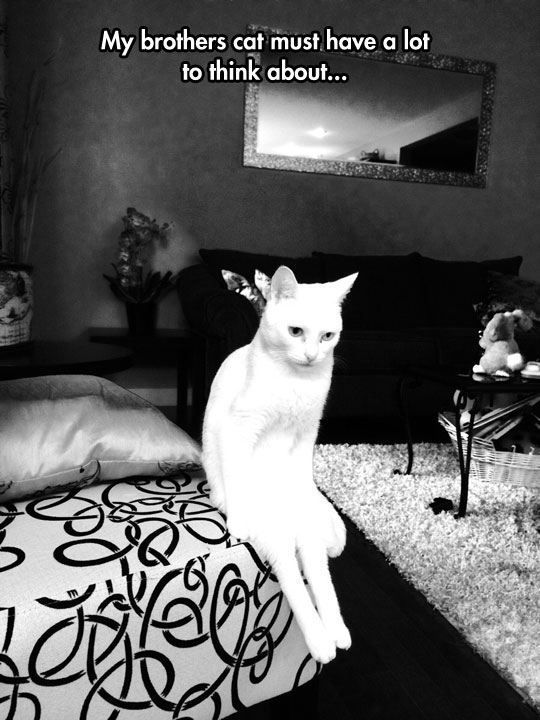 funny-picture-cat-thinking-seating-couch