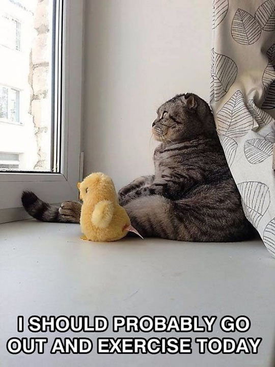 funny-picture-cat-toy-looking-window