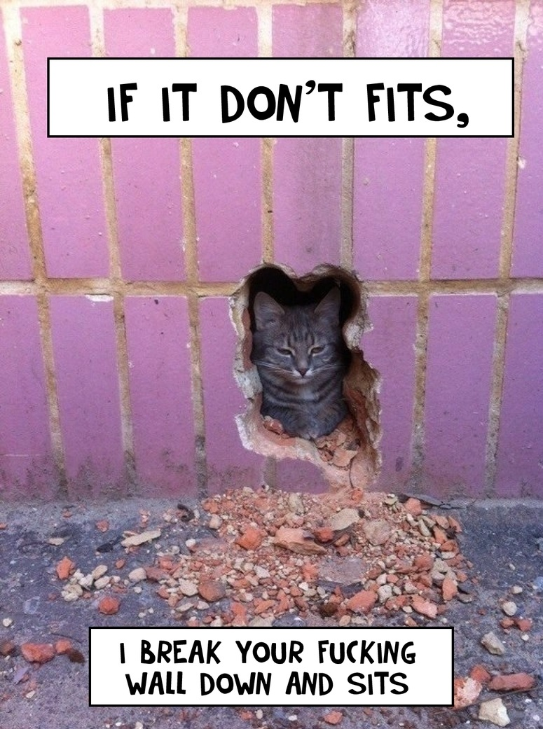 funny-picture-cat-wall