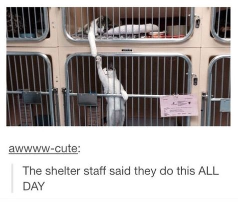 funny-picture-cats-all-day