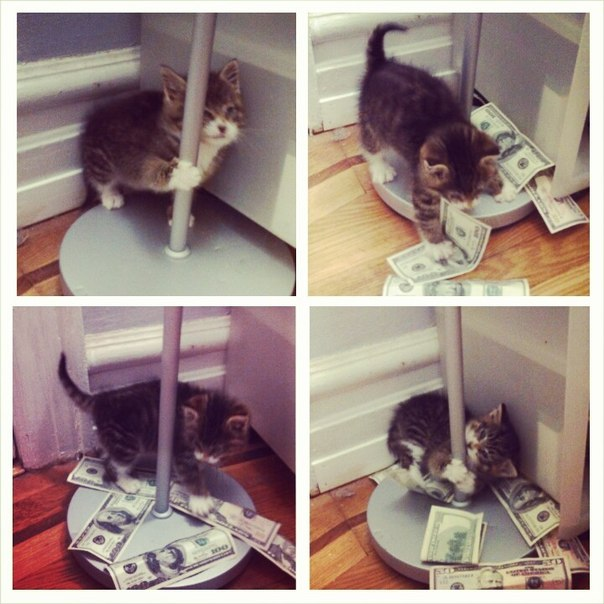 funny-picture-cats-money