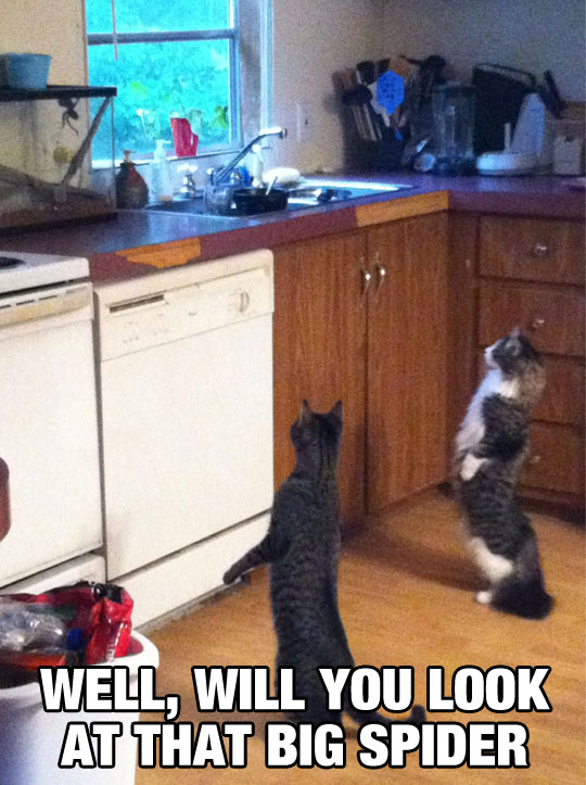 funny-picture-cats-standing-up-watching-spider