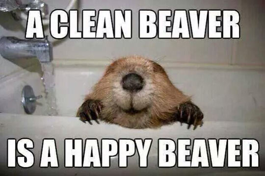 funny-picture-clean-beaver-happy-tub-bathroom