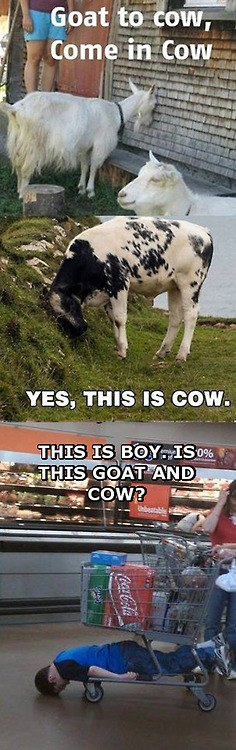 funny-picture-cow-kid