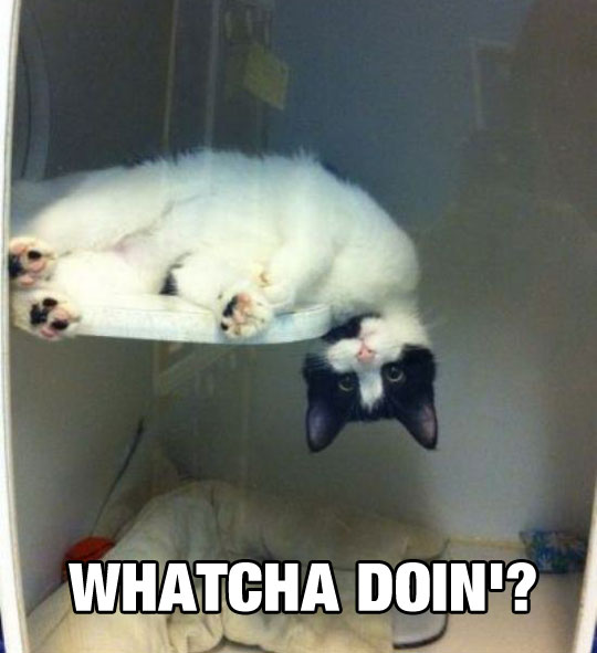 funny-picture-cute-cat-upside-down-bed