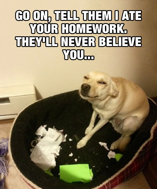 funny-picture-dog-ate-homework-face