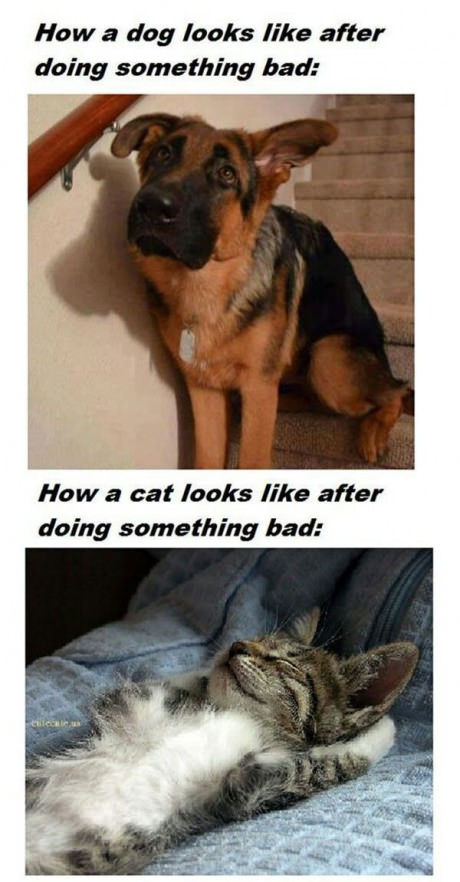 funny-picture-dog-cat-guilt