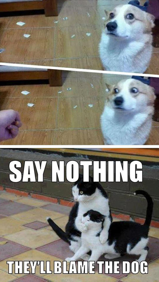 funny-picture-dog-cat-mess-blame