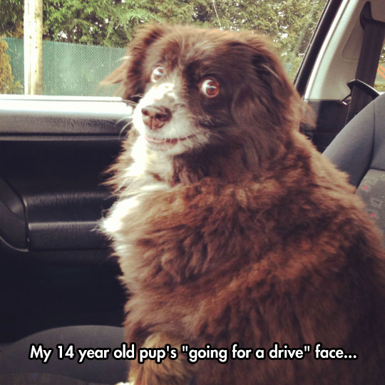 funny-picture-dog-face-car-ride