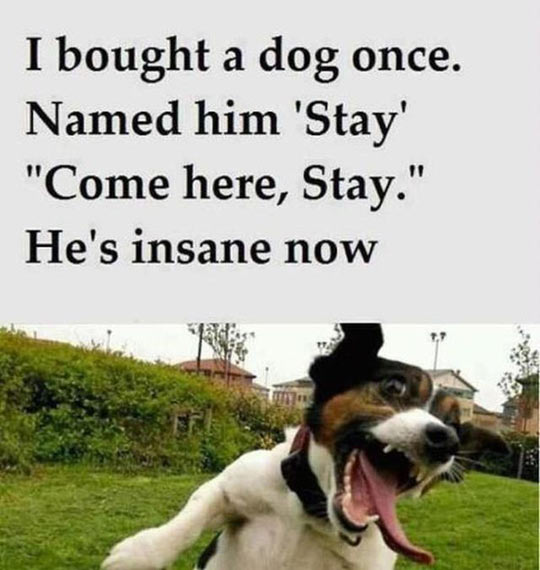 stay strong quotes cute puppy quotesgram