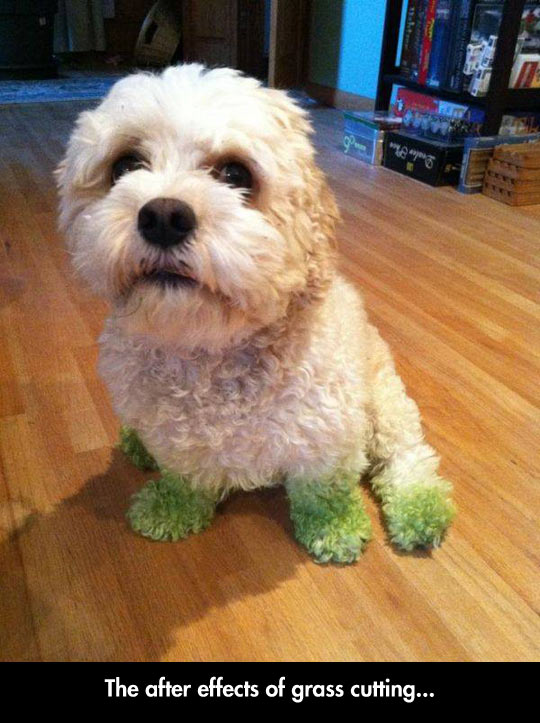 funny-picture-dog-paw-green-grass