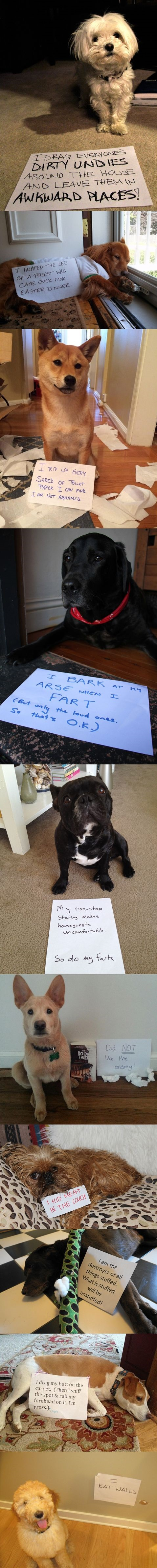 funny-picture-dog-shaming-compilation