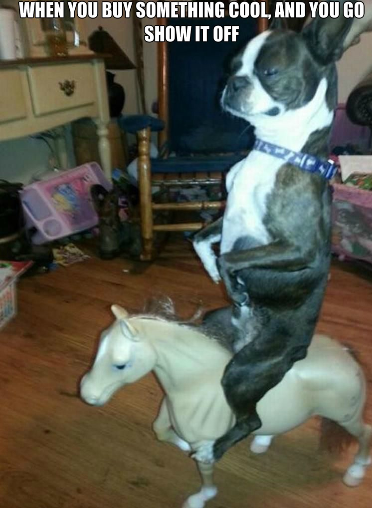 funny-picture-dog-show-off