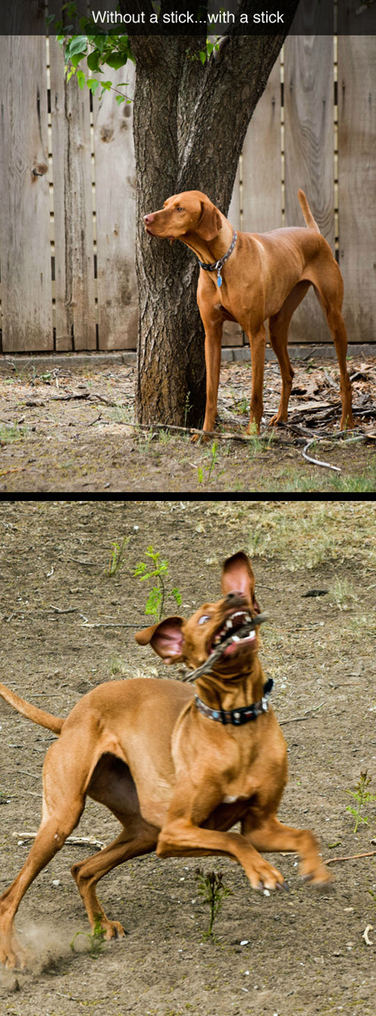 funny-picture-dog-stick-proud-ridiculous