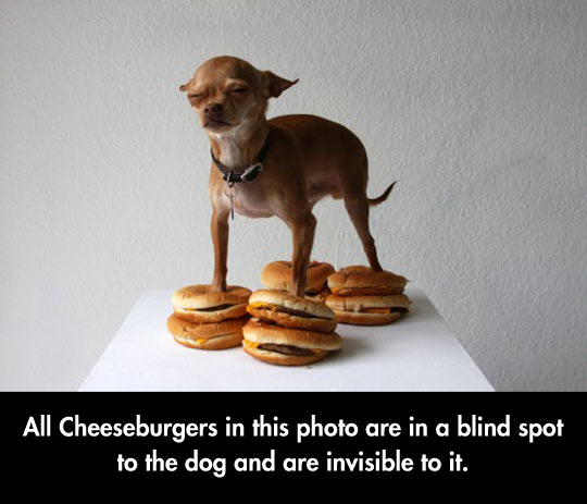 funny-picture-dogs-eyes-cheese-burgers