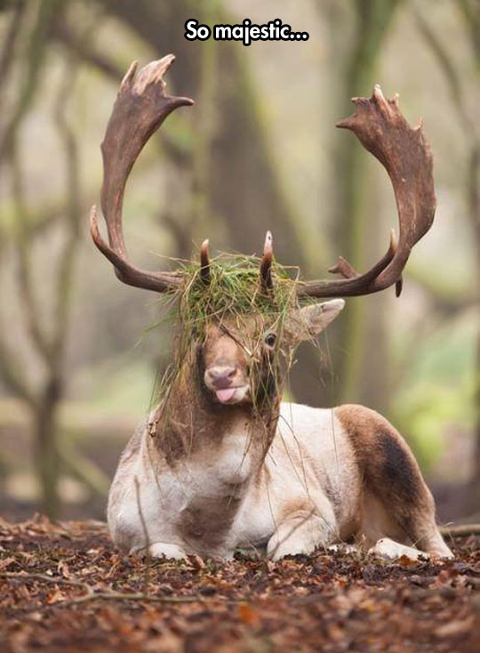 funny-picture-dumb-moose-antlers-grass