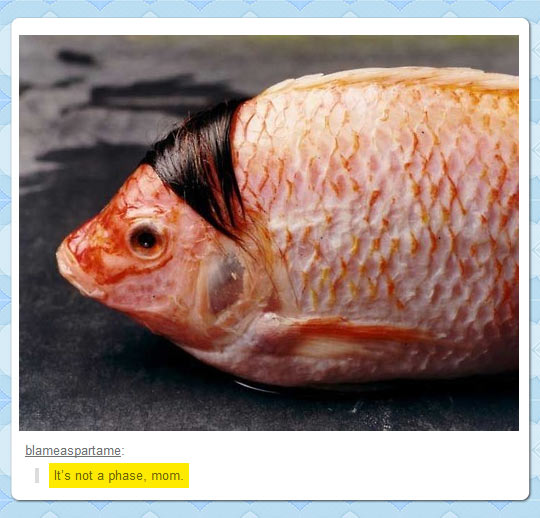 funny-picture-fish-hair-emo-sad