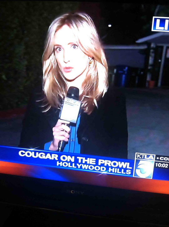 funny-picture-girl-TV-face-news-cougar