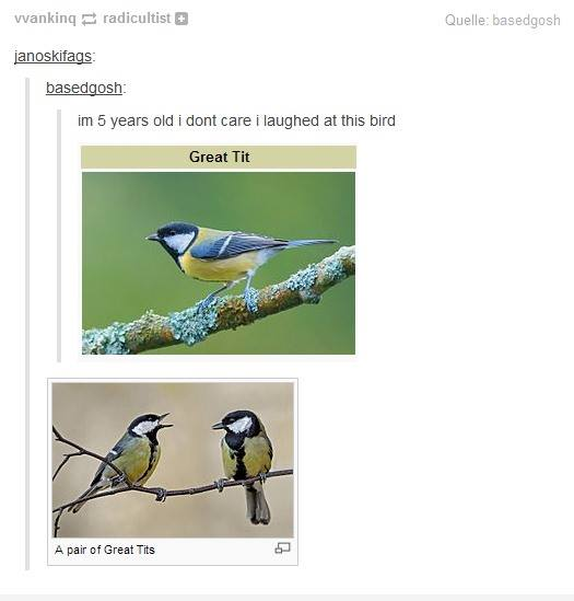funny-picture-great-tits