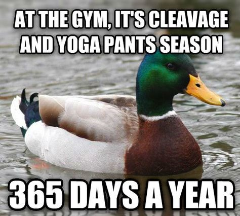 funny-picture-gym-yoga-pants