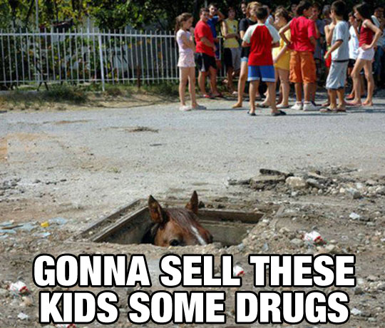 funny-picture-horse-hiding-kids-sell