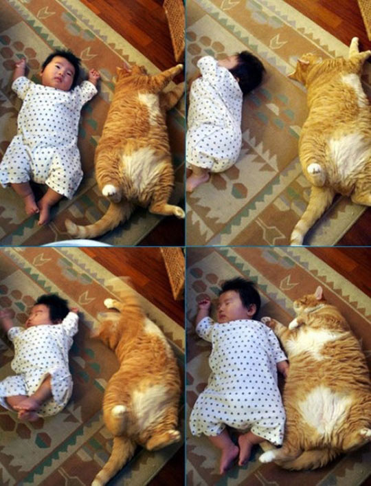 funny-picture-little-baby-fat-cat