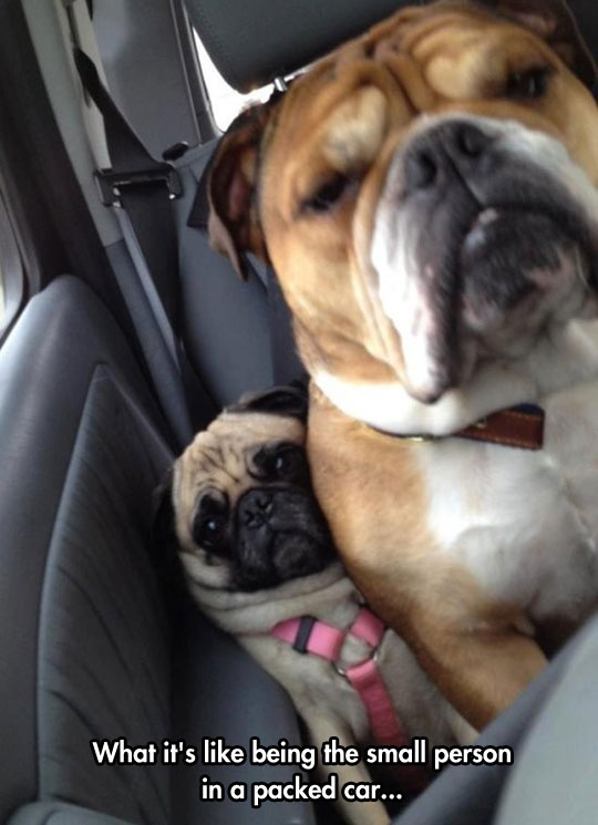 funny-picture-little-big-dog-car-space