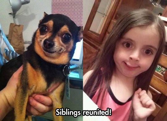 funny-picture-little-girl-face-smile-weird-dog