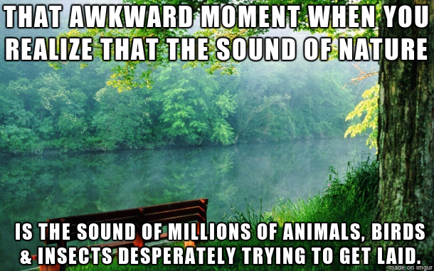 funny-picture-nature-sound