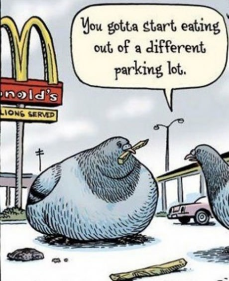 funny-picture-pegion-fat-mcdonalds