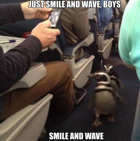 funny-picture-penguins-smile-and-wave