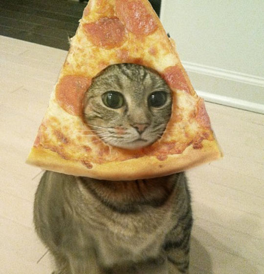 funny-picture-pizza-cat-head-disguise