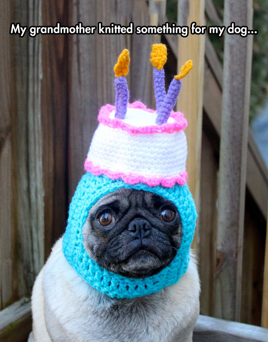 funny-picture-pug-dog-happy-birthday-hat