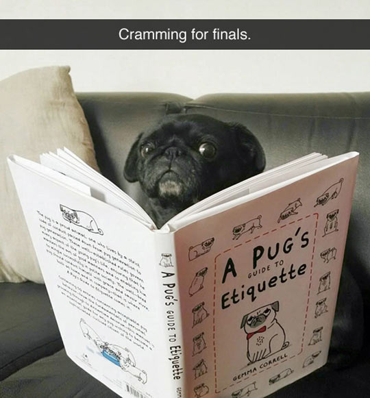 funny-picture-pug-reading-book-etiquette