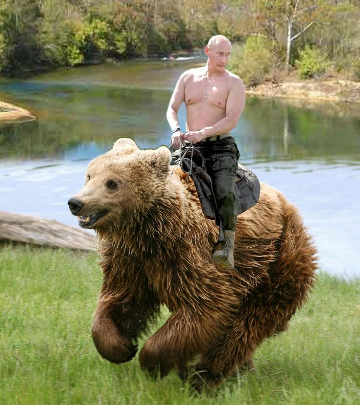 funny-picture-putin-funny-pictures-more-in-comments