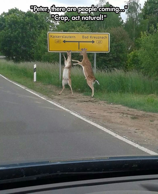 funny-picture-road-deer-sign-forest